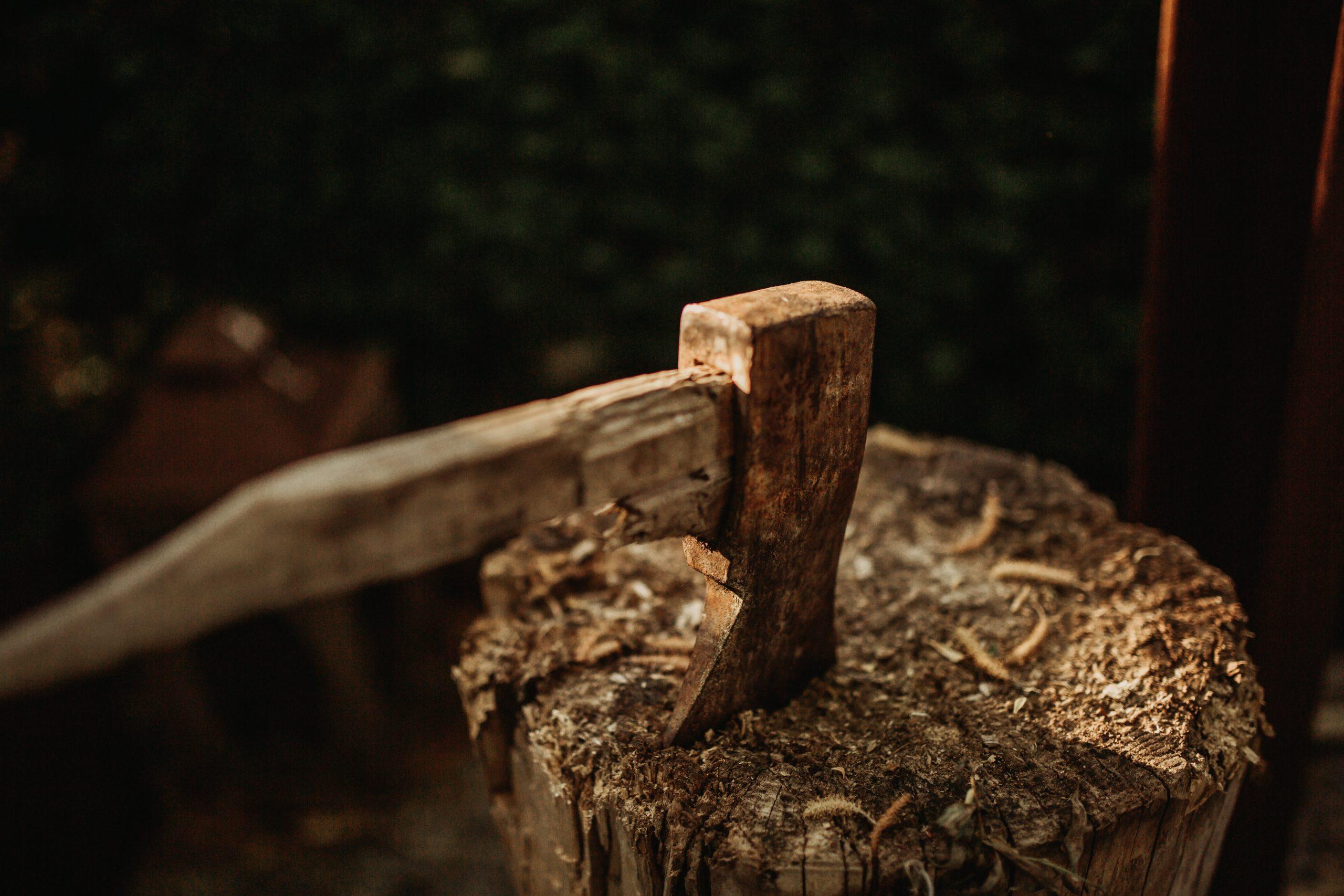 kevin schmid 65es iLjvVo unsplash scaled - Skal du have fældet træer i haven?