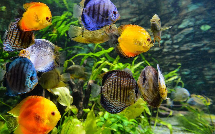 daniel corneschi GsAJ4 Tsz c unsplash 840x525 - Pleje af akvarie